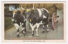 Yoked Oxen Hay Wagon Nova Scotia Canada postcard