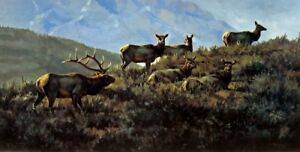 Autumn Harem by Paco Young Wildlife Elk Print 32x19