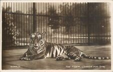 Postcard Tiger London Zoo Real photo posted 1937