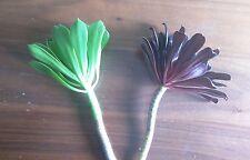 """2 x  5"""" Cuttings: 1 Black Rose SCHWARZKOPF aeonium arboreum  succulent & 1 Green"""