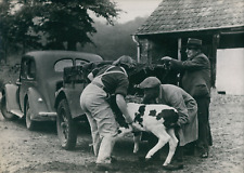 France, Femme de l Armée Féminine de la terre aidant un fermier, 1939, Vintage s