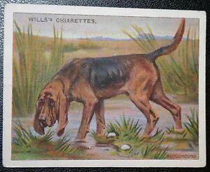 BLOODHOUND     Original Vintage   Colour Card  VGC