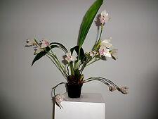 Angulocaste Olympus Libertys Primavera Bloomer NUEVO Orquídea Orquídeas