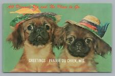 """""""All Dressed Up & No Place to Go� Prairie Du Chien Rare Vintage Cute Dogs 1960s"""