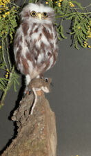 Little Owl and Mouse- Needle Felted Animal Sculpture, Faux Taxidemy, Unique Gift