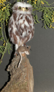 Little Owl & Mouse, Needle Felted Animal Sculpture,  - now sold, example only