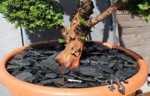 Schiefer Mulch - Canadian Slate Zier Steine Deko Aquarium Garten Terrarium
