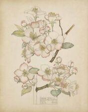 Mackintosh Rennie Charles Crab Apple Chiddingstone Print 11 x 14    #5192
