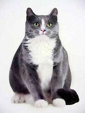 "Cat Birthday Card ""Junebug"" - CDC01-0022E"