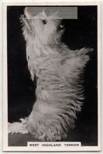 West Highland White Terrier Dog Canine Pet Animal 1930s Trade Ad Card