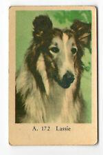 1950s Swedish Film Star Card A Set #172 Rough Collie Film Star Dog Lassie