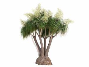 Eine sehr schöne Zimmerpflanze: der elegante Elefantenfuss, palmenähnlich !