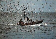 BF37315 france retour de peche a la sardine en bretagne  Boat Ship Bateaux