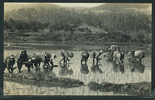 PH PHILIPPINES Baguio RPPC c.1920 WORKERS PLANTING RICE PLANTS in Paddy