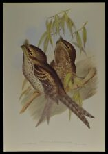John Gould Marbled Podargus Bird British Museum Official Limited Print