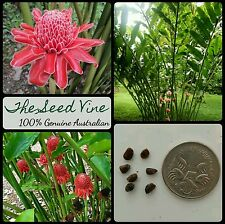 20+ RED TORCH GINGER LILY SEEDS (Etlingera elatior) Tropical Ornamental Edible