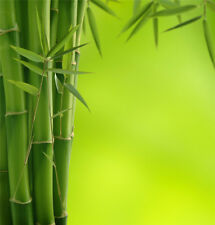 Vinyl Studio Backdrop Photography Background 5x7FT Green Bamboo Pole & Leaves LB