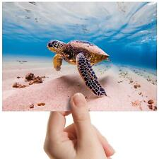 "Swimming Turtle Tortoise Scuba Small Photograph 6""x4"" Art Print Photo Gift #8503"