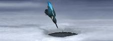 3d/lentikular-dimenare-segnalibro: Martin pescatore a Caccia-Hunting Kingfisher