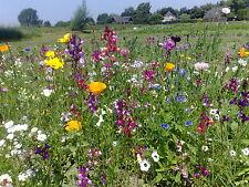 Blumenwiese 1001-Nacht einjährige Blumenmischung Bienen Schmetterlinge Insekten