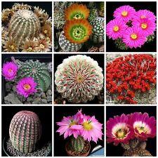 20 semi in miscuglio di Echinocereus mix , piante grasse,seed cactus mix