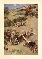 DOGS FOXHOUNDS AND RED COATED HUNTSMEN, HUNTERS FOX HUNTING COLOR SPORTING PRINT
