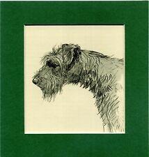 ~ Kerry Blue Terrier ~ Hand Coloured Print K F Barker  Genuine Vintage 1939
