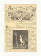 Welch Wunder Schmitzberger Zigarre Katze Tiere Rauch Qualm Holzstich E 6818