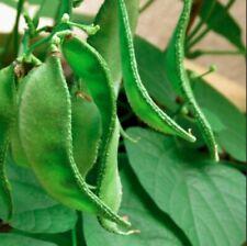 Gardening Lab Beans (Avarai) Seeds - Plant Based