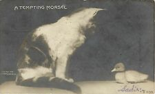 1901-07 Rotograph Real Photo Cat Pc B1255; A Tempting Morsel- Cat sees Duckling