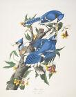 John James Audubon Blue Birds Canvas Print 16 x 20