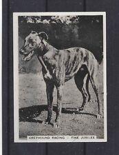 1930s UK Dog Art Full Body Study Ardath Cigarette Trade Card GREYHOUND RACING