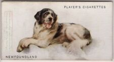 Newfoundland Dog Canine Pet 1920s Ad Trade Card