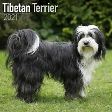 Tibetan Terrier Calendar 2021 Premium Dog Breed Calendars