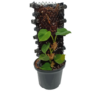 Up Plantae: NARROW (Climbing Plant Support, Connectable Moss Totem Pole, Grow Ve