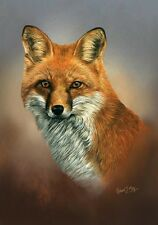 Fox Head Study Limited Edition Print by Robert J. May