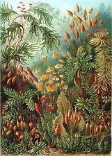 Kunstformen der Natur by Ernst Haeckel 100 art color plates on one DVD
