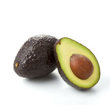 1 Hass avocado tree, living rooted tree.  Zones 9-11 or indoors as potted plant.