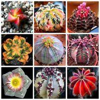 100pcs/bag True Cactus Seeds,Mini Cactus,Prickly Pear,Bonsai Flower Seeds,Potted