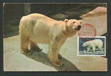 RUSSIA MK 1957 FAUNA EISBÄR POLAR BEAR OURS BLANC CARTE MAXIMUM CARD MC CM d7718