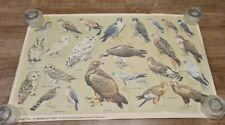 RSPB Chart No 6 Birds Of Prey Print - Rare - See Pictures