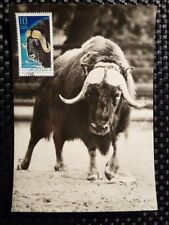 DDR MK 1970 1617 TIERE MOSCHUSOCHSE MUSK OX MAXIMUMKARTE MAXIMUM CARD MC CM 8448