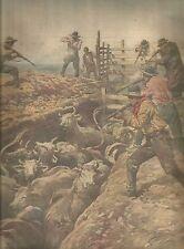 K0939 Agenti governativi uccidono il bestiame infetto da epidemia_Stampa antica