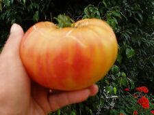15 graines semences tomate  ANANAS jaune zébrée sanguine,Seeds 1ér en France Bio