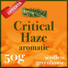 Offerta Infiorescenze   Critical haze 50G