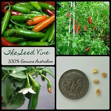 50 ORGANIC SERRANO CHILLI SEEDS (Capsicum annum) NON GMO Heirloom Jalapeno Spicy