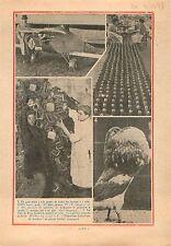 Pigeon Boulant Exposition Aviculture/Stock de Bouteille de Champagne USA 1933