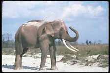107089 éléphant indien énorme taureau poussière baignade A4 papier photo