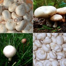 Organic White Mushroom Seeds Healthy Delicious Edible Vegetable Seed 100Pcs