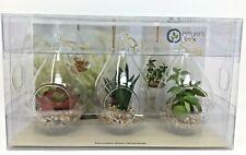New Natures Mark Faux Succulent Glass Ornaments Set of 3 Home Decor 3x6 Plants